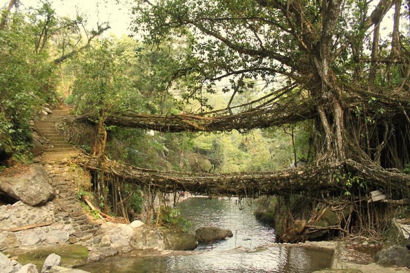 puentes-raices-india
