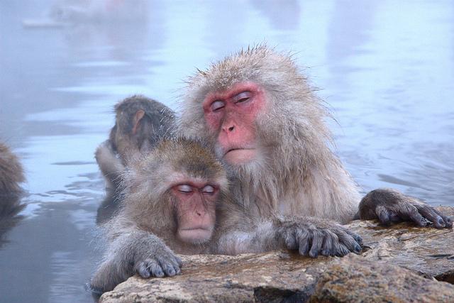Baños Termales Japon:Estos monos están muy relajados y sus caras no pueden ocultarlo