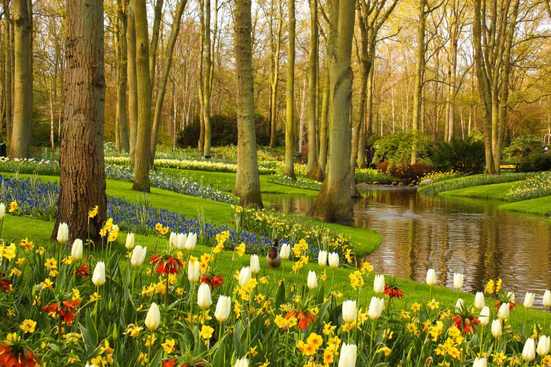 el-jardin-flores-mas-bonito-de-holanda