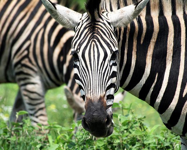 sudafrica-fotos-paisajes