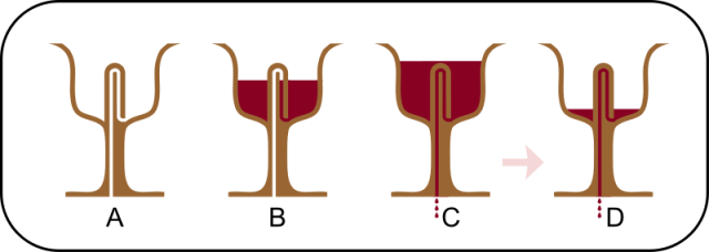 copa-de-pitagoras-2
