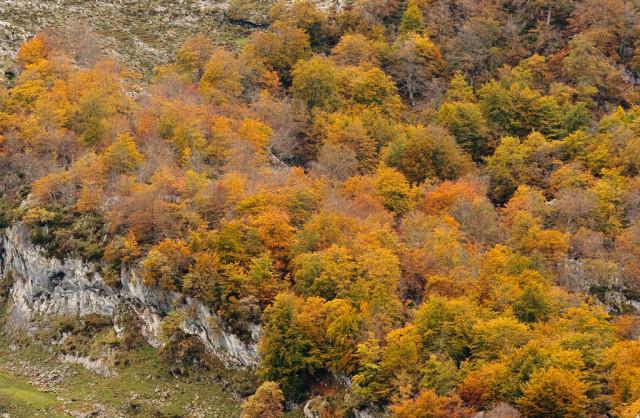 covadonga-asturias