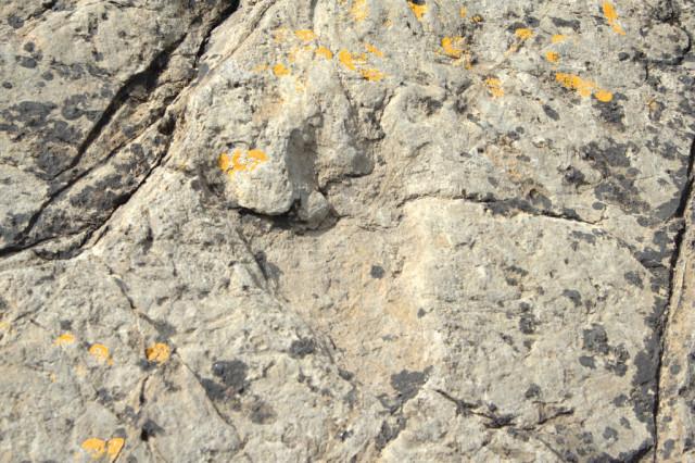 ruta-de-los-dinosaurios-asturias-2