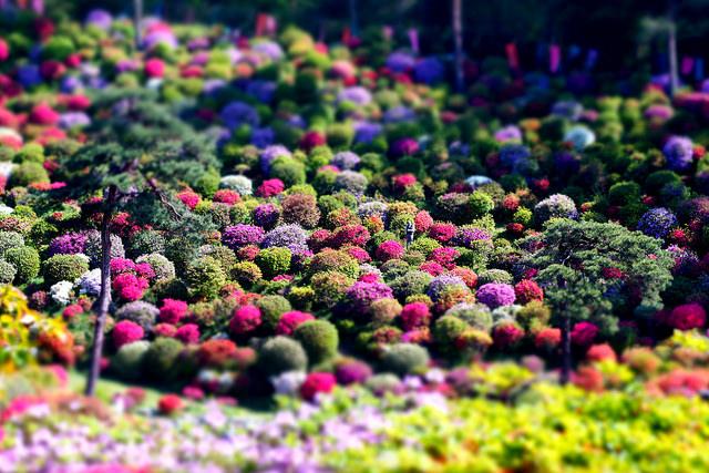 azaleas-templo-japon