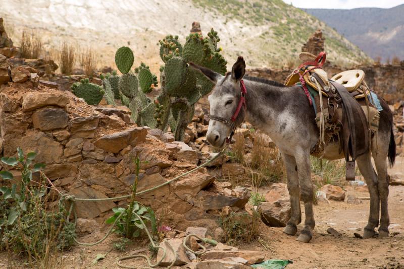 pueblos-bonitos-de-mexico-real-de-catorce